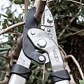 Триони и ножици за клони
